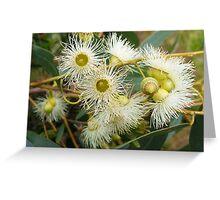 yellow gum Greeting Card