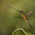 Swordbilled Hummingbird by citrineblue