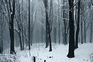 Snow storm. by Donovan wilson