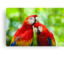 Scarlet Macaws Canvas Print