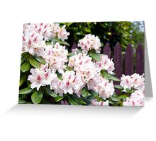 Pink Beauty in Spring Greeting Card