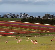 Table Cape in Springtime by Chris Putnam