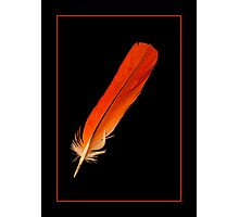 The Feather Photographic Print