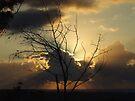 """""""Sunrise Beams"""" by debsphotos"""