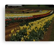 Rows Of Colour Canvas Print