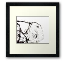 Elephant Evolution Framed Print