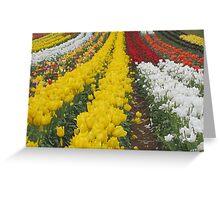 Tulips Tulips Everywhere Greeting Card