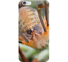 Harvestman Close up iPhone Case/Skin