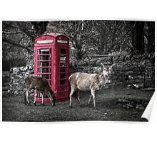 Deers @ Red Telephone Box (Kiosk 6) Poster