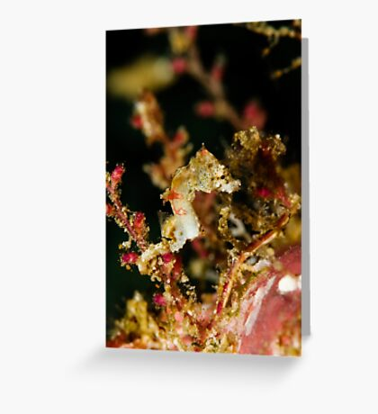 Weedy Pygme Seahorse Greeting Card