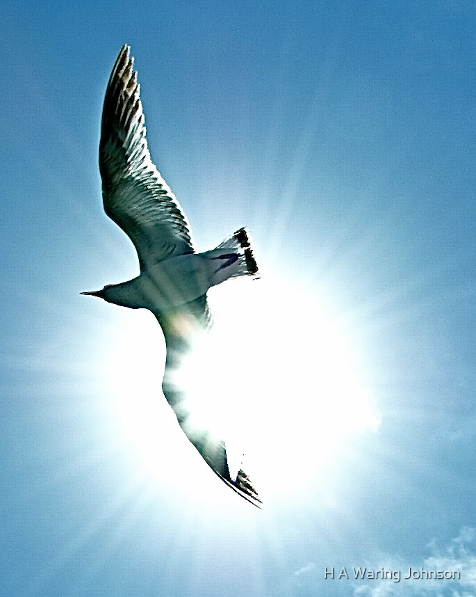Flying High by H A Waring Johnson