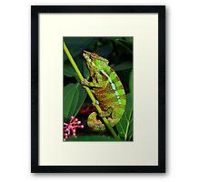 GREEN PANTHER Framed Print