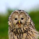 Portrait of an Ural Owl by Anne-Marie Bokslag