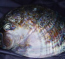 Abalone © by jansnow