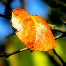 Autumn is Back by pmn-photography