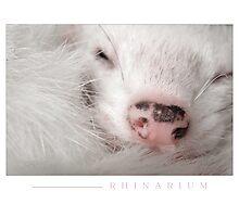 Rhinarium Photographic Print