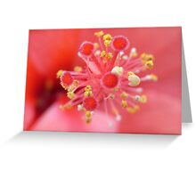 hibiscus III Greeting Card