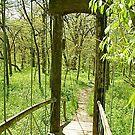 Walking Bridge in Spring by H A Waring Johnson
