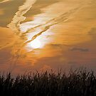 Fall Sunset Over Corn by H A Waring Johnson