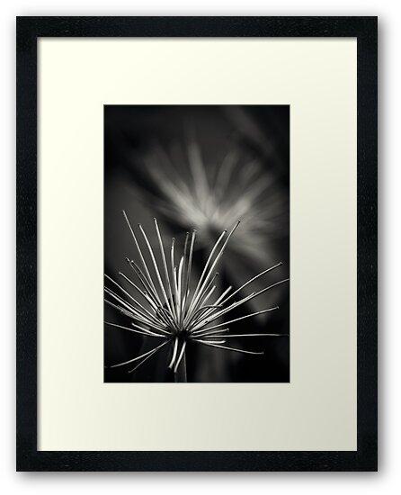 Untitled 1.0 by James McKenzie