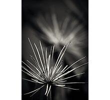 Untitled 1.0 Photographic Print