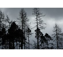Trees at Rydal Photographic Print