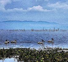 Pelicans On The Lake by Kay  G Larsen