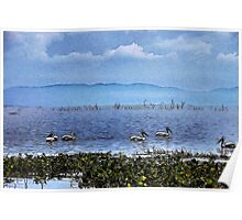 Pelicans On The Lake Poster