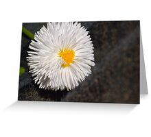 Daisy VI Greeting Card