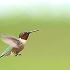 Ruby-throated Hummingbird by Jim Cumming