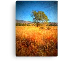 The Tree by the Side of the Road Canvas Print