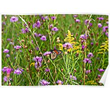 Monarch in flowers Poster