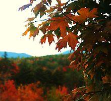 New England Autumn by Elizabeth  Hubbard