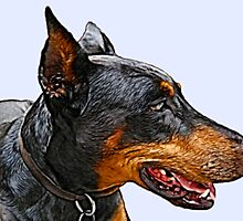 Portrait of a wonderful dog by maxy