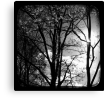 Trees in the Afternoon Sun - TTV Canvas Print