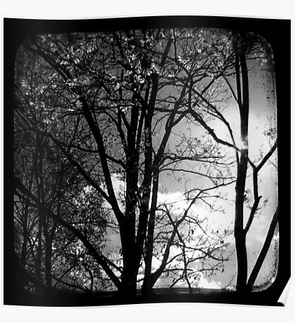 Trees in the Afternoon Sun - TTV Poster