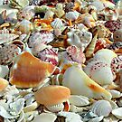Seashells on the Seashore ... ... by Danceintherain