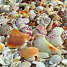 Seashells on the Seashore ... ... by Danceintherain