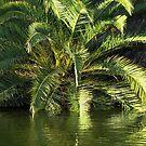 Reflected Palm by Ellen Cotton