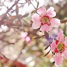 Cherry Blossoms by mindy23