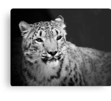 Snow Leopard Metal Print