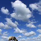 Doesn't that cloud look like a Sheep? by Dale North Photography