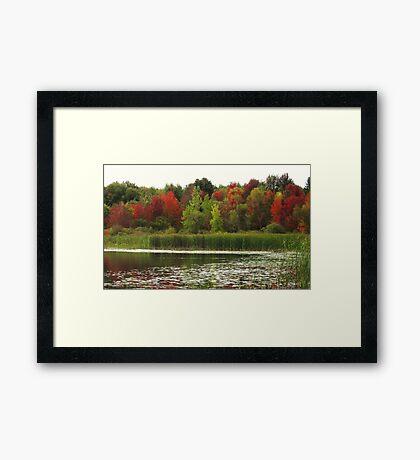Fall in Michigan Framed Print