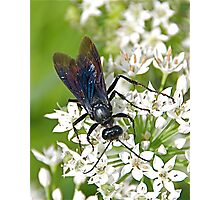 Dark Bug on White Flowers Photographic Print