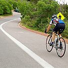 Mountain Biker by H A Waring Johnson