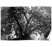 all hallows tree Poster