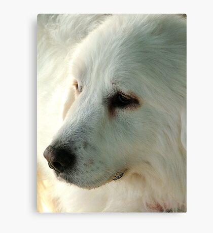 Great Pyrenees Canvas Print