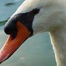 Swan by Diana Forgione