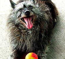 Rocky's ball by Robin Nellist