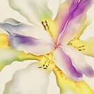 Pastel Perfection by pat gamwell